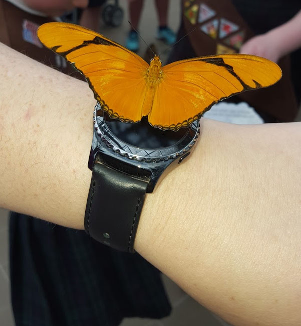 Butterflies for Real!